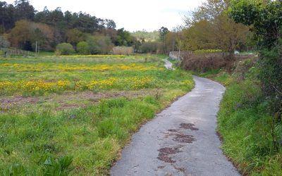 Relatos del Camino Universal: El Camino en Silencio